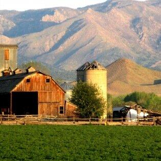 Мормоны растили себе жен на ферме